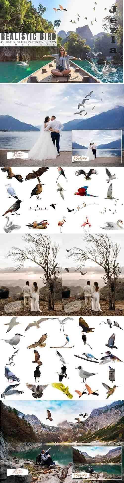45 Realistic Bird Overlays - 784826
