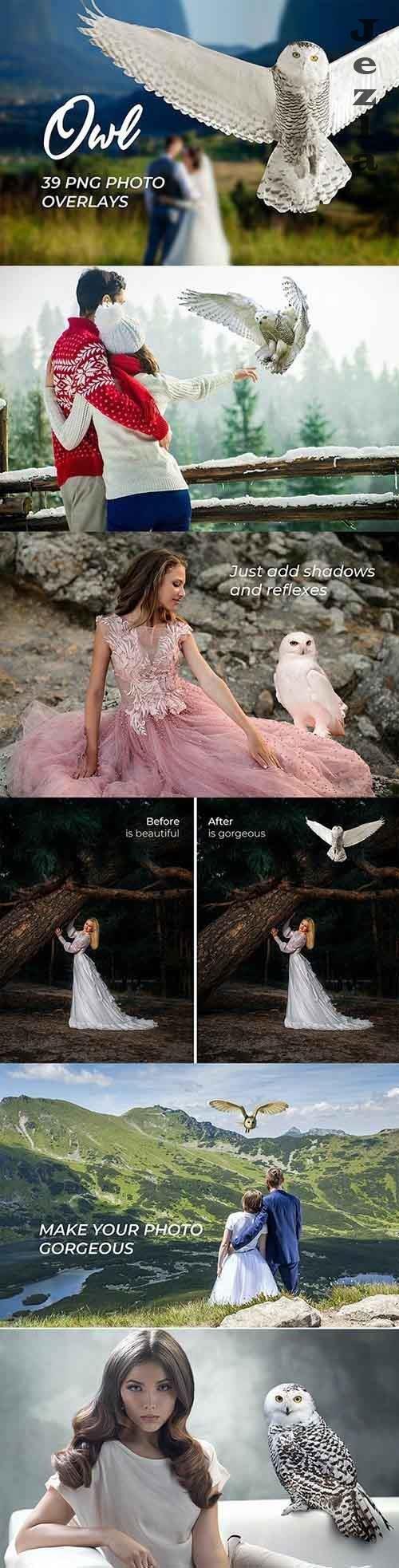 39 Owl Photo Overlays 3909270