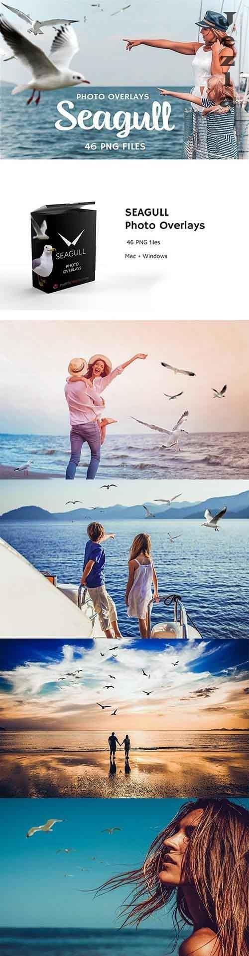 46 Seagull Photo Overlays 5224595