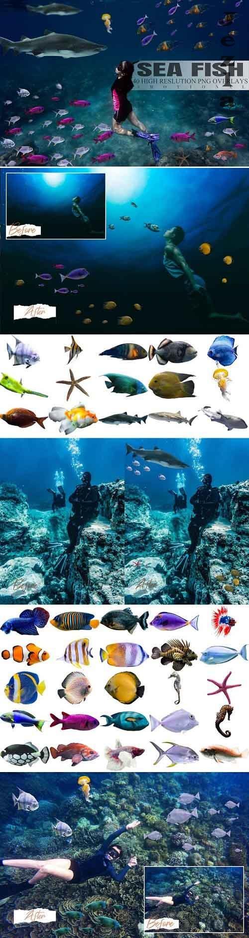 40 Sea Fish Overlays - 819509