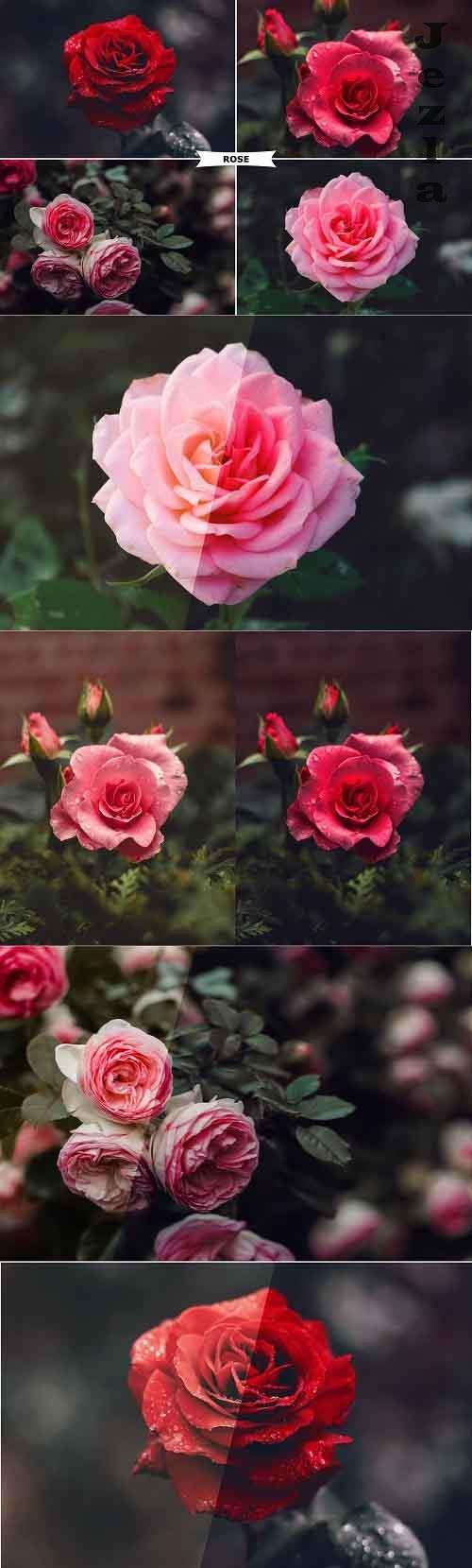 Rose PHSP Action 4974092