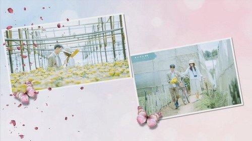 Проект ProShow Producer - Love Blossom