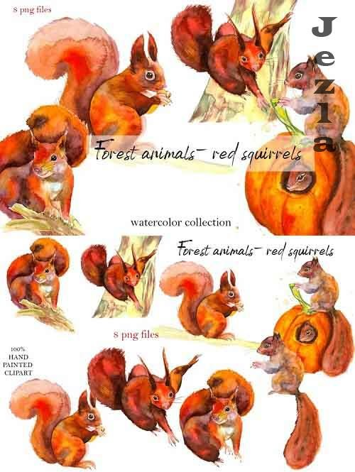 Forest animals - red squirrels. Watercolor - 905967