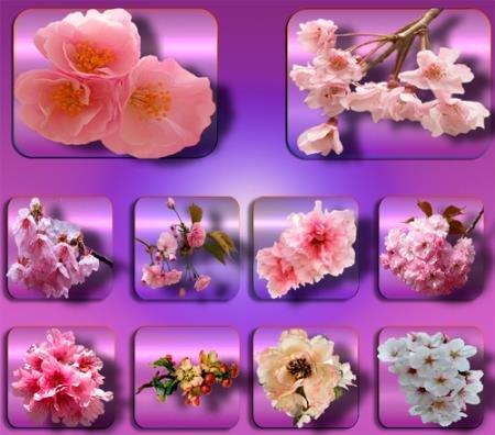 Картинки на прозрачном фоне - Цветы в саду