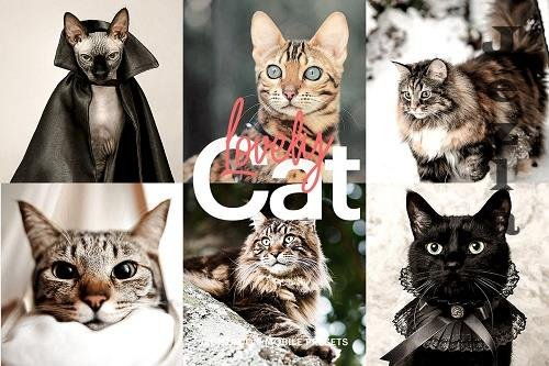CreativeMarket - Lightroom Preset-Lovely Cat Theme 4973248