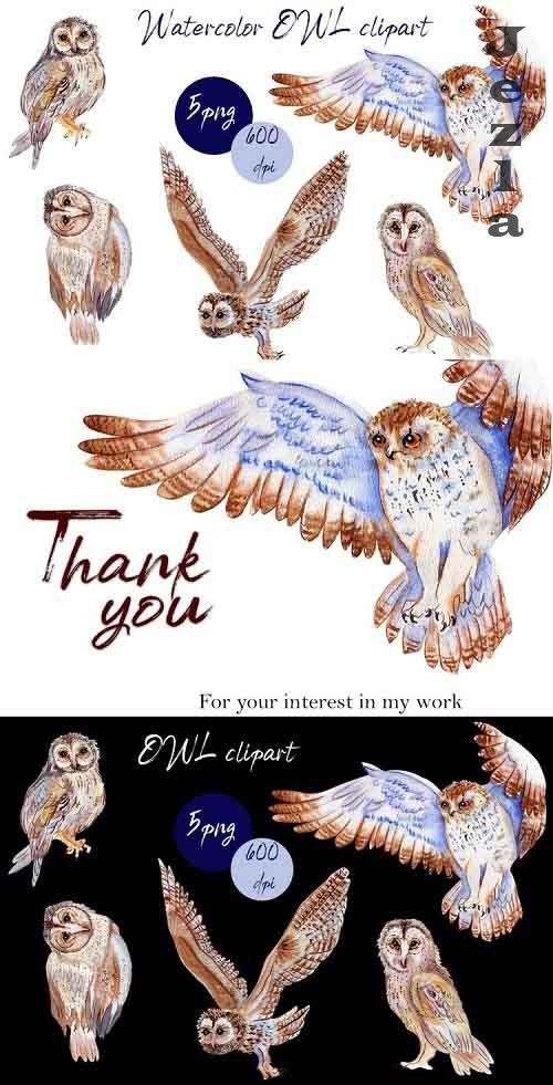 BOHO owl clipart.Watercolor woodland - 1018807