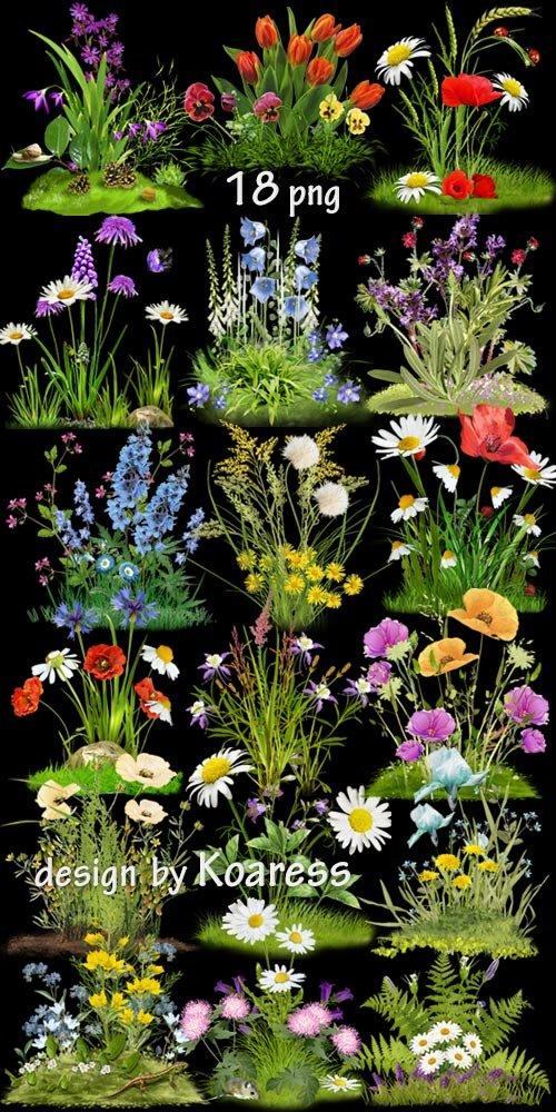 Png клипарт для дизайна Цветочные поляны -  Set of Png clipart Floral glades