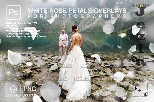 Falling Rose Petals Photo Overlays, White petals png - 1133527