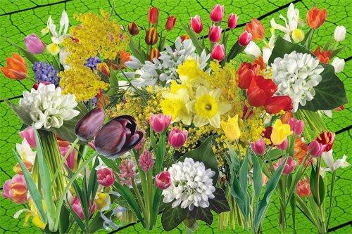 Клипарт Ранние весенние цветы