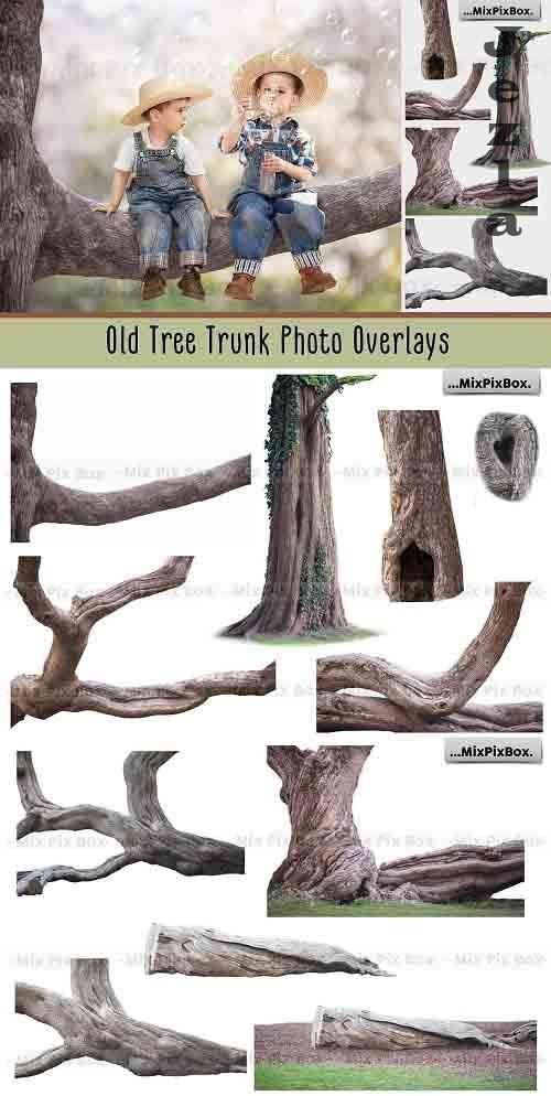 Old Tree Trunk Photo Overlays - 6116946