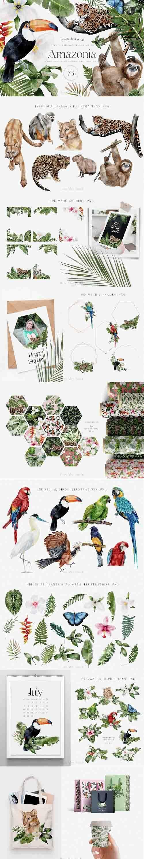 Tropical Rainforest Illustrations Collection and Patterns - 1408970