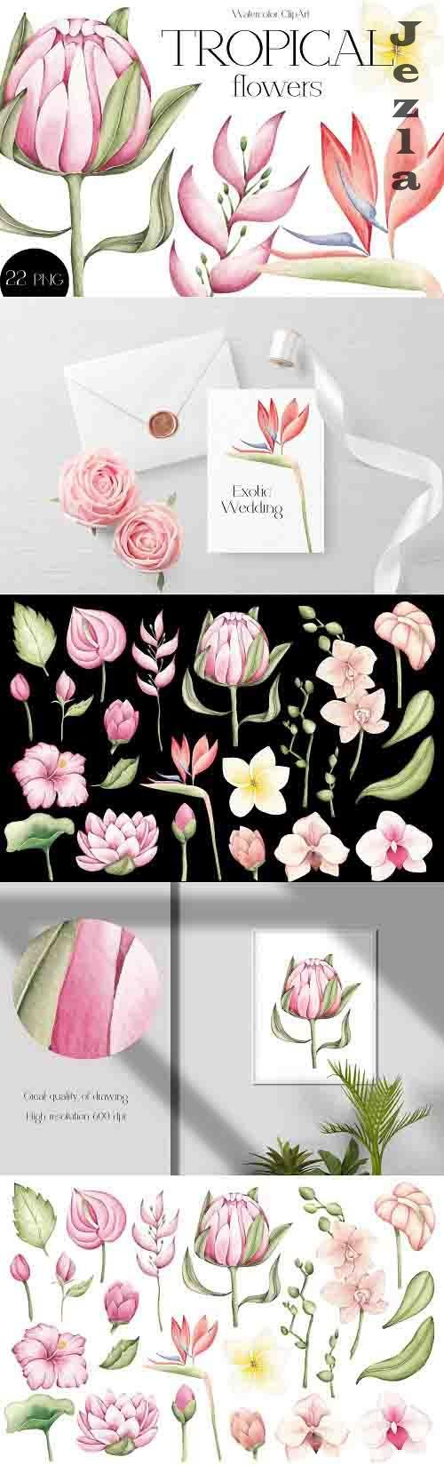 Watercolor ClipArt Tropical Flowers - 1418481