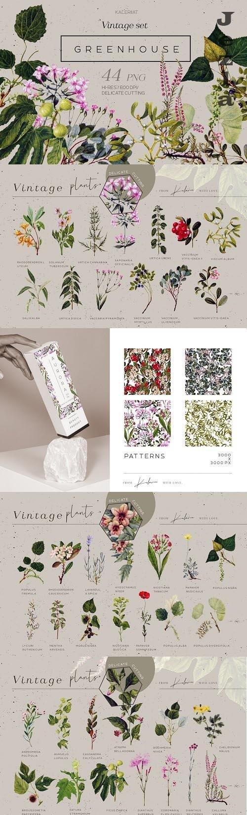 Greenhouse - Vintage Botanical Set - 5264466
