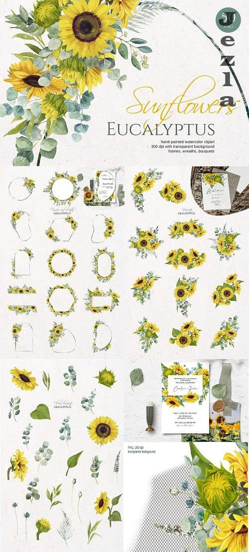 Sunflower Eucalyptus. Watercolor set - 6302125