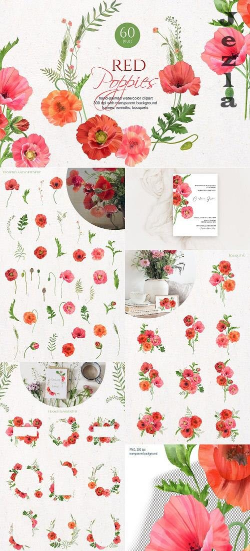 Red poppies watercolor collection - 6299067