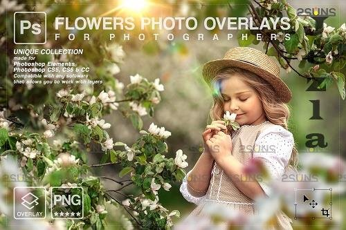 Flower overlay , PHSP overlay, Flower overlays - 1447820