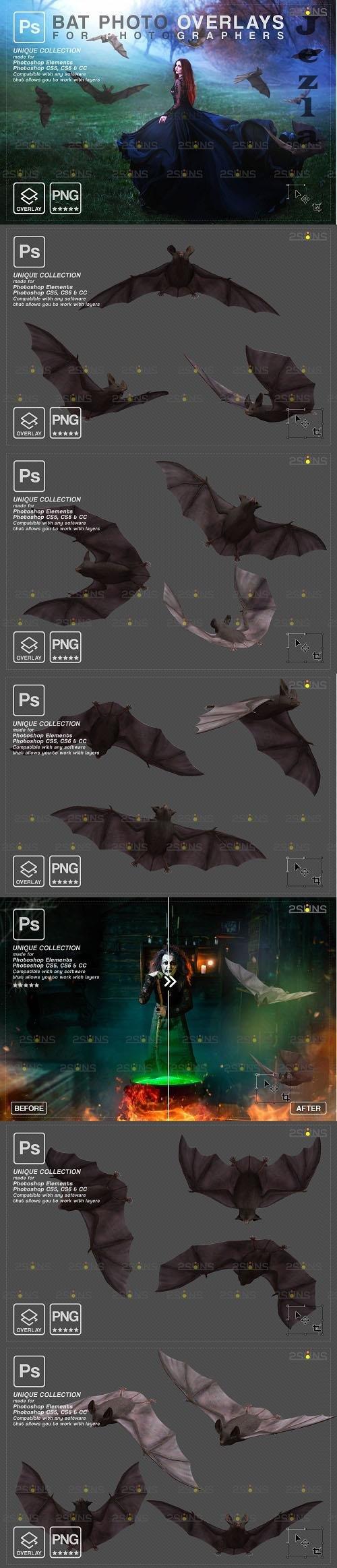 Halloween overlay PHSP overlay Realistic bat clipart - 1447939